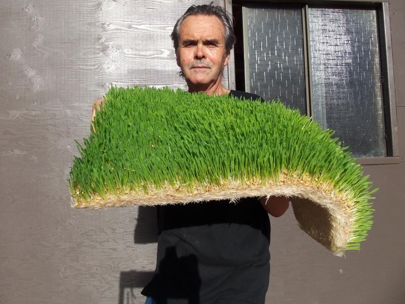 2 square feet of fresh grass